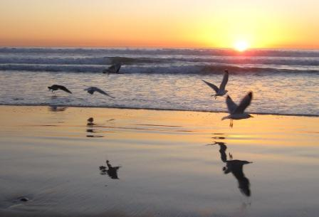 Seagulls taking flight over Del Mar Beach, CA